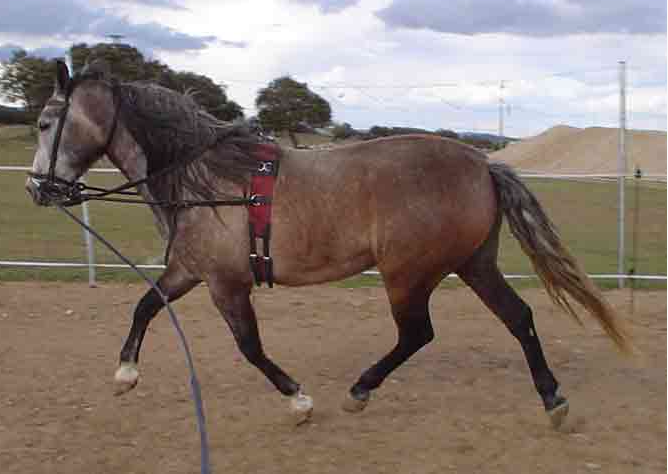 Pedido Doma de caballos