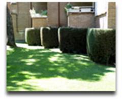 Perfilados de setos y arbustos