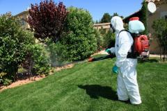 Control de plagas y enfermedades en céspedes, árboles, arbustos y palmeras